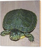 Baby Turtle Looking Up Wood Print
