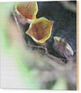 Baby Wrens In The Flowers 338 Wood Print