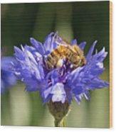 Bachelor Button And Bee Wood Print