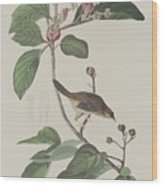 Bachman's Finch Wood Print