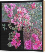 Back Door Bougainvillea Wood Print by Eikoni Images