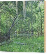 Back In Time In Florida Wood Print