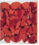 Back Lit Flower Petals  Wood Print