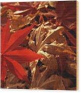 Back-lit Japanese Maple Leaf On Dried Leaves Wood Print