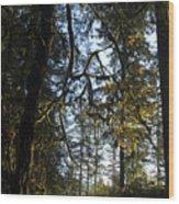 Back Lit Wood Print