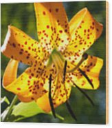 Back-lit Yellow Tiger Lily Wood Print
