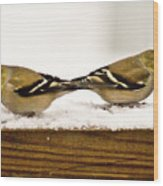 Back To Back American Gold Finches Wood Print