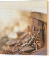 Backbone Of America  Wood Print