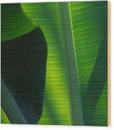Backlit Banana Leaves Wood Print