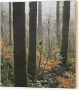 Backlit Bracken Ferns Wood Print