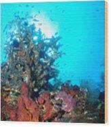 Backlit Coral Wood Print