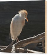Backlit Egret Wood Print