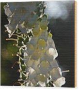 Backlit Foxgloves 2 Wood Print