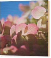 Backlit Hydrangea Wood Print