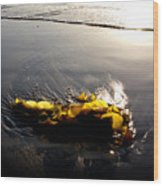 Backlit Kelp Wood Print