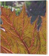 Backlit Leaf 2 Wood Print