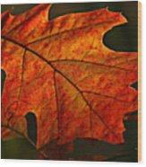 Backlit Leaf Wood Print