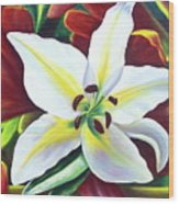 Backlit Lilly Wood Print