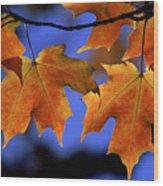 Backlit Maple Leaves Wood Print