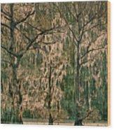 Backlit Moss-covered Trees Caddo Lake Texas Wood Print
