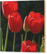 Backlit Red Tulips Wood Print