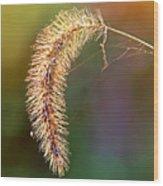 Backlit Seed Head In Fall Wood Print
