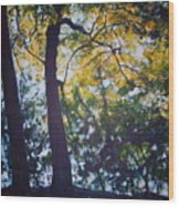 Backlit Wood Print