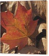Backlit Sugar Maple Leaf In Dried Leaves Wood Print