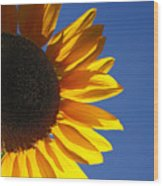Backlit Sunflower Wood Print