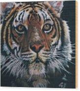 Backlit Tiger Wood Print