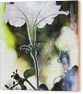 Backlit White Flower Wood Print