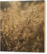 Backlit Wildflower Seeds In Autumn Wood Print