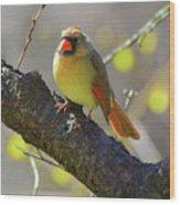 Backyard Bird Female Northern Cardinal Wood Print