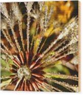 Backyard Bokeh Wood Print