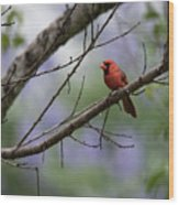 Backyard Cardinal Wood Print