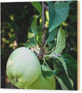 Backyard Garden Series - 2 Apples Wood Print