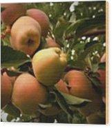Backyard Garden Series - Apples Cluster Wood Print