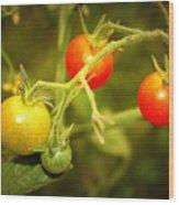 Backyard Garden Series - Cherry Tomatoes Wood Print