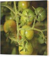 Backyard Garden Series - Green Cherry Tomatoes Wood Print