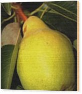Backyard Garden Series - One Pear Wood Print