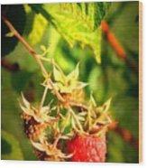 Backyard Garden Series - One Ripe Raspberry Wood Print