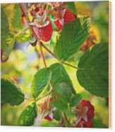 Backyard Garden Series - Sunlight On Raspberries Wood Print