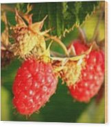 Backyard Garden Series - Two Ripe Raspberries Wood Print