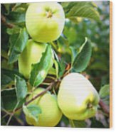 Backyard Garden Series- Golden Delicious Apples Wood Print