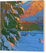 Backyard Glow Wood Print