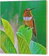 Backyard Hummingbird #22 Wood Print