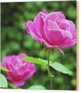 Backyard Rose Wood Print