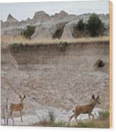 Badlands Deer Sd Wood Print