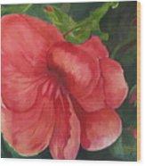 Bahama Beauty Wood Print