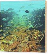 Bahamas Shipwreck Fish Wood Print